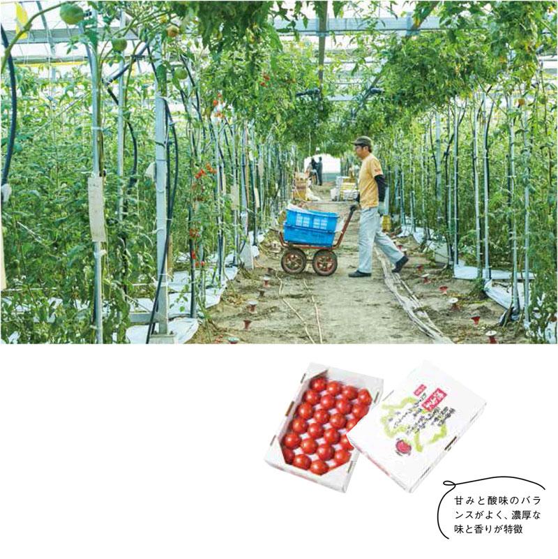 umashima_page02